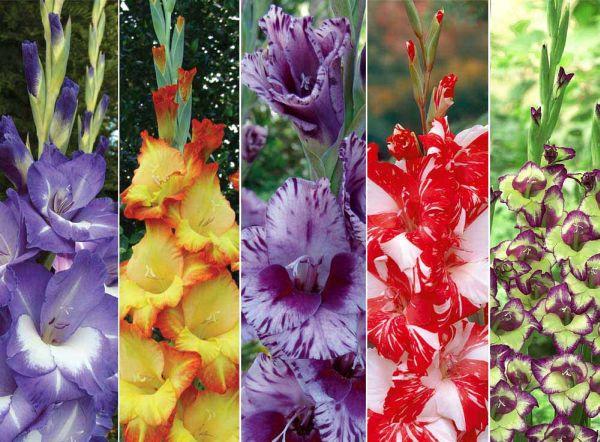 Wedding Flowers That Will Make Your Wedding Look Cool Wedding Clan