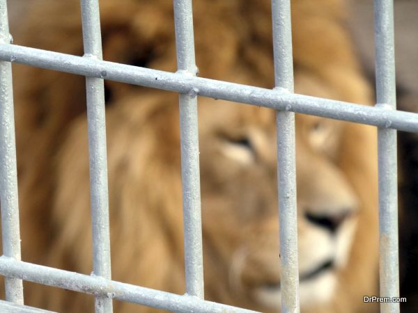 Dare to Wed in the Lion's Cage