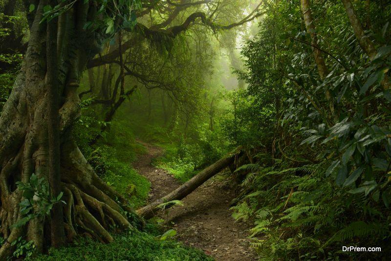 Sponsor a rainforest