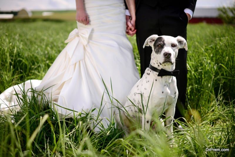 including pets in your wedding ceremony